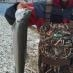 Fishing Sale/Swap Ancaster... - last post by yukondave