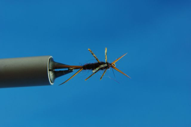 stonefly (top view)