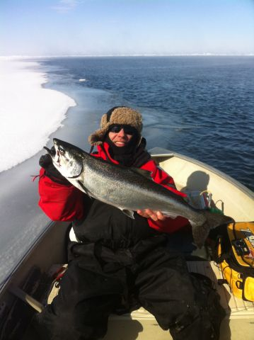 Chinook Salmon FEB2014