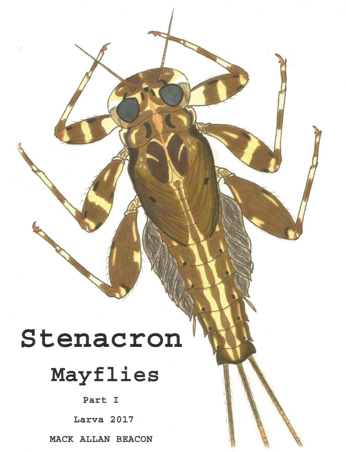 Insect identification Mayflies - Fly Fishing - Ontario Fishing Forums