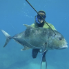 Spearfishing in Toronto - last post by northspear
